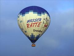 Wasserratte Dresden