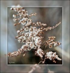 Winterpelz - Winter fur
