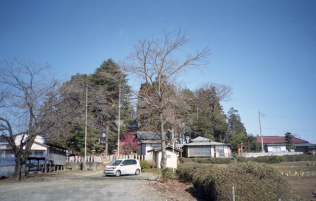 Grove of the village shrine