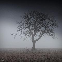 Solitude de l'hiver