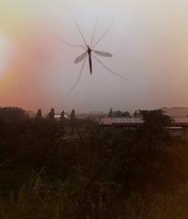 Una piccola libellula si è posata sul vetro della cucina ed è volata via questa mattina con l'alba rosata!