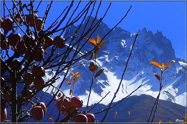 Pommes vers 3500m d'altitude