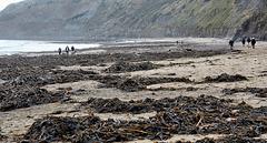 Runswick Bay – dog walk beach and valley exit