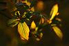 Mother Nature's golden treasures