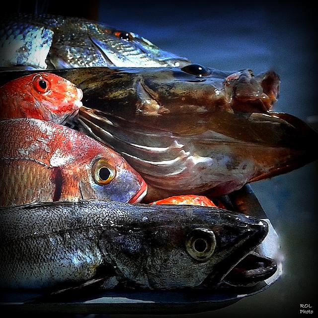 La mer.... et ses poissons... me manquent..!