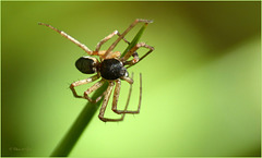 Spiders are not as creepy as they look like :-)
