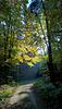 Alzenau, Wald, Deutschland