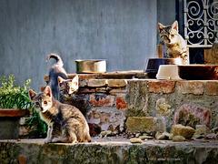 ... wasgucksdu ... Die Drei - jung und frech und neugierig