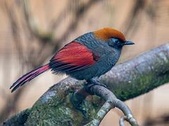 Tropical bird.3jpg