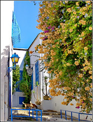 Tunisi : Sidi Bu Said 10 -   (Cartagine)