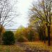 Le soleil et la pluie ont rouillé la forêt