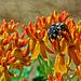 _6035121_DxOdL · Another bee
