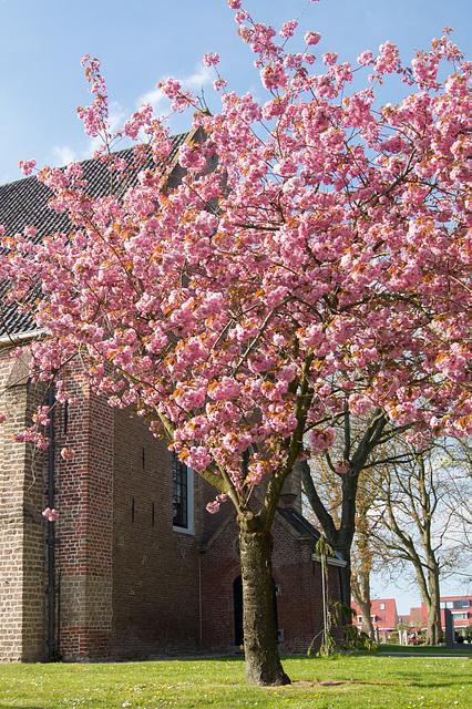 Niederlande - Blumentage Limmen DSC01673