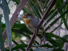 Tropical bird2
