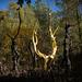 arbre en or