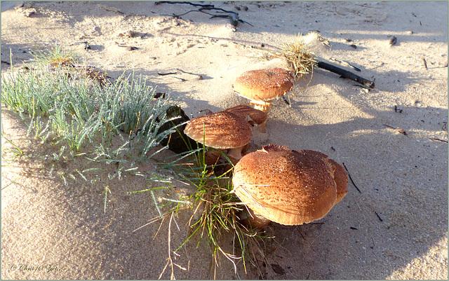 Beauties between the Sand...