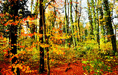 Sous bois de saison