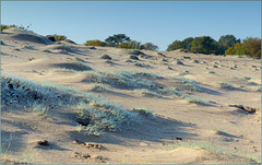 Small Dunes on a big One...