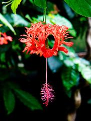 Tropical flower (1)