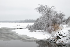 monochromie hivernale