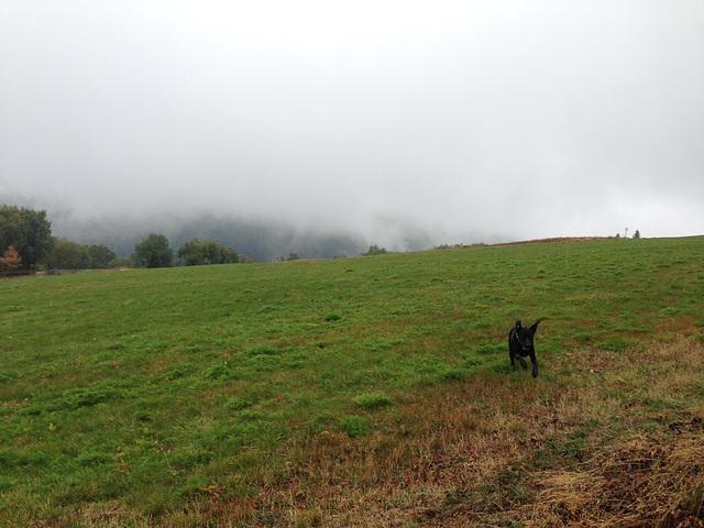 Mala hüpft durch Regen und Nebel....