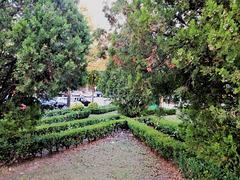A small garden between Benfica's blocks - VII