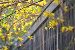 Frühlings HFF