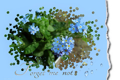 forget-me-not ツ