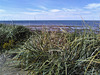 Végétation flavienne / Beach scrub