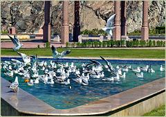 Mutrah : Una vasca di acqua dolce, punto di incontro dei gabbiani