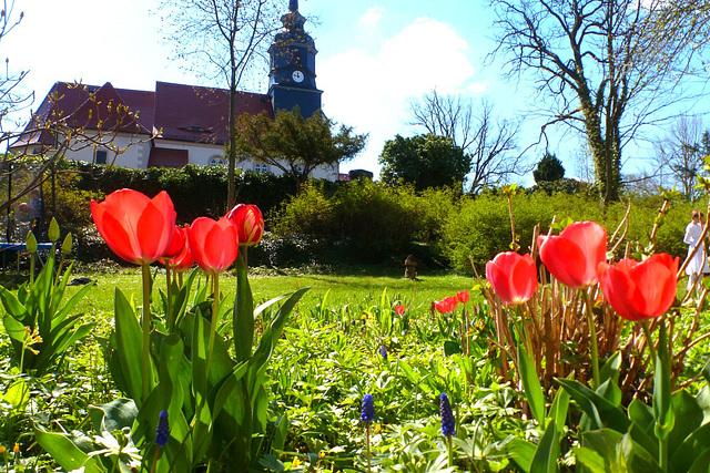 Kirche mit Tulpen - preĝejo kun tulipoj