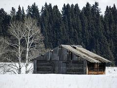 Old barn in spring snow