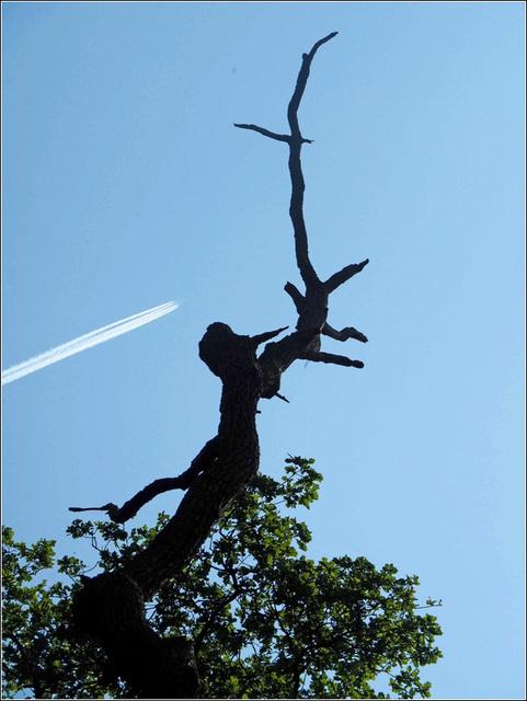 L'arbre et l'avion