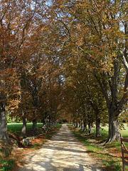 autunno in Provenza