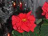 Auguri al gruppo con una rosa di Natale