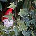 Heimlicher Beoachter im Blätterwald