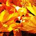 It is autumn - hurrah!!