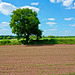 Gnosall fields