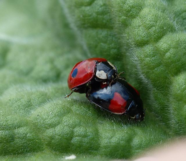 Tiny Ladybirds