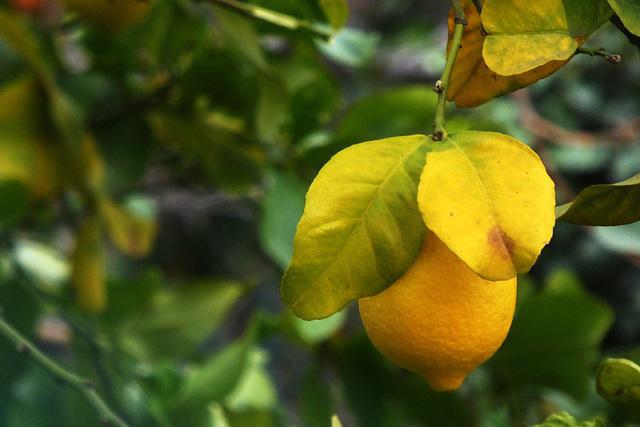 un po' di vitamina C