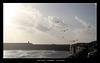 Gulls patrol West Beach - Newhaven - 2 11 2020