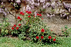 Cet été dans mon jardin, This summer in my garden.