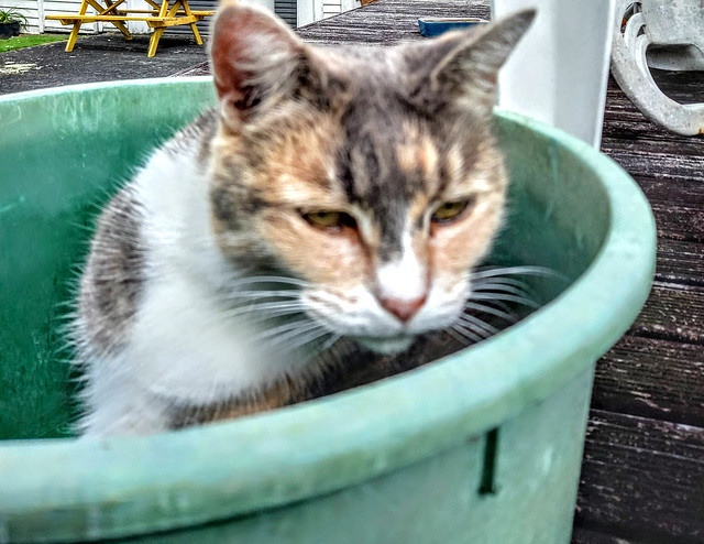 Kitty In A Plastic Bowl.
