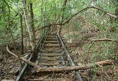 Bahnbrechende Natur