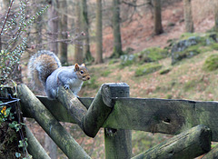 A bright eyed and bushy tailed HFF to you all.