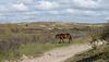 Nordholländisches Dünenreservat DSC01634