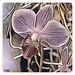 Orchideé Art