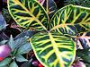 Leaf Beauty.
