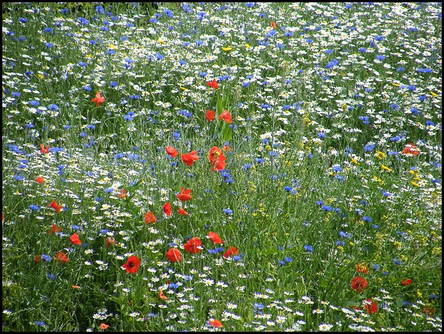Nature's red, white and blue