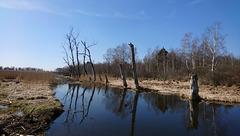 Am Staudacher Forst